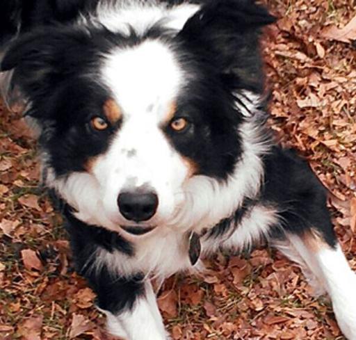 Deputy Dog Juno